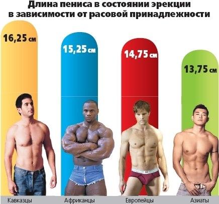 Длина пениса по нациям