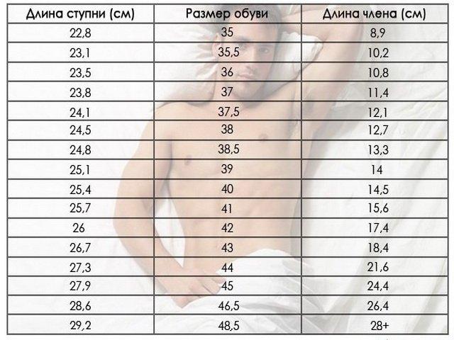 Размеры полового члена мужчины