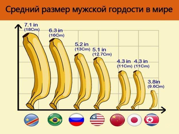Размеры членов по нациям