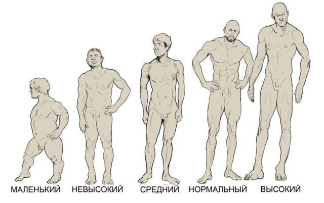 Рост мужчины и размер члена