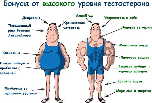 Плюсы высокого уровня тестостерона